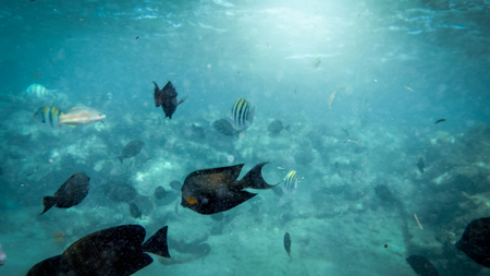 Closeup underwater photo of coral reef fishes swimming in the ocean next to sandy sea bottom