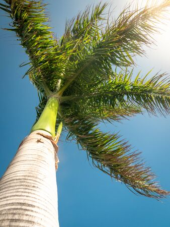 View from ground on high palm with long leaves under heavy wind against blue sky and sun Banco de Imagens