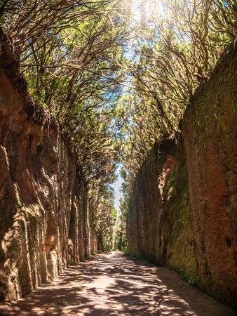 Beautiful photo of narrow pathwoy between granite mountains in the old forest of Anaga, Tenerife