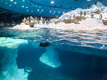 Underwater photo of penguin diving in the cold water from iceberg