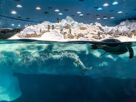 Photo of penguins jumping and diving in the water from big floating iceberg
