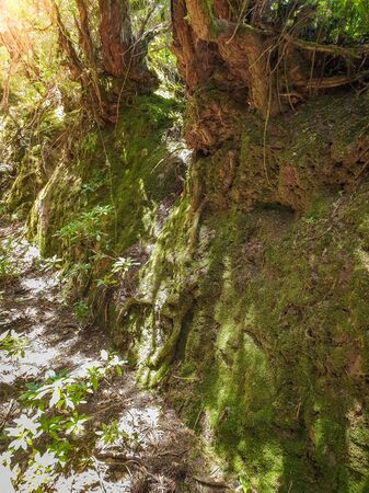 Closeup photo of big rocks and trees overgrown with moss at old forest