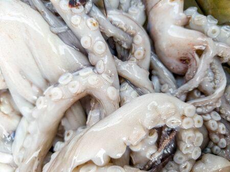 Macro disgusting photo of raw slimy octopus tentacles
