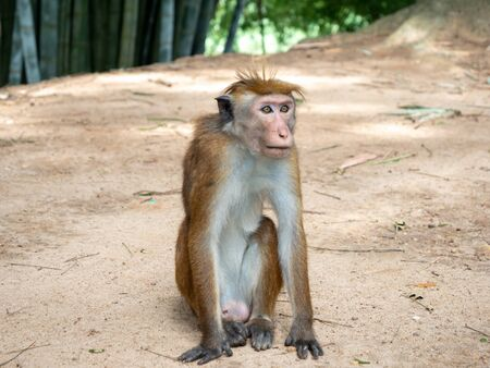 Closeup photo of cute macaque monkey sitting on the ground at park