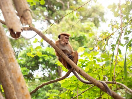 Closeup photo of funny monkey sitting on the tree branch at jungle forest Stock Photo
