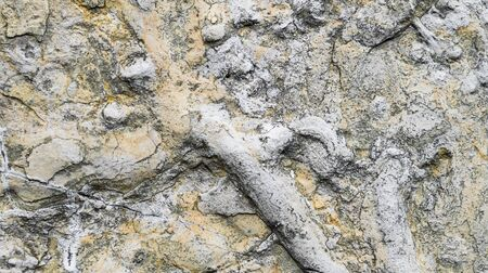 limestone texture usable as texture or background.