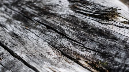 old cracked wood with visible details. textura