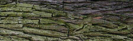 oak bark with visible details of background or texture Zdjęcie Seryjne
