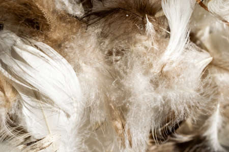 white and brown duck feathers