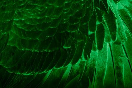 green feather pigeon macro photo. texture or background Foto de archivo