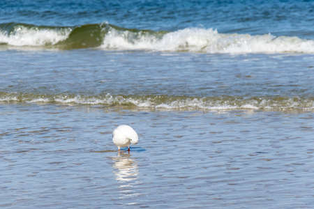 white seagull on the background of sea waves Standard-Bild