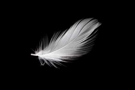 white duck feathers isolated on black background Standard-Bild