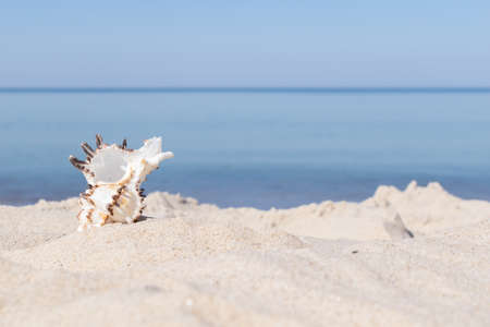 the shell of the sea snail against the background of sand and blue sea