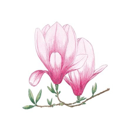 Watercolor flowers Magnolia. Exotic tropical flower for spa, relax, holiday. Arrangement with lily perfectly for printing design on invitations, cards, wall art and other. Hand painted. Banque d'images