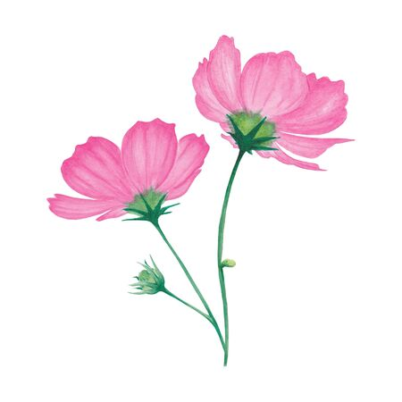 Watercolor pink flowers with leaf and bud. Abstract flower for spa, relax, holiday. Arrangement perfectly for printing design on invitations, cards, wall art and other. Hand painted. Banque d'images