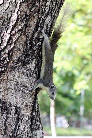 terrestrial mammal: chipmunk