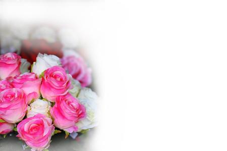 rose background