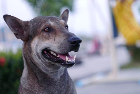 quadruped: portrait a dog Stock Photo
