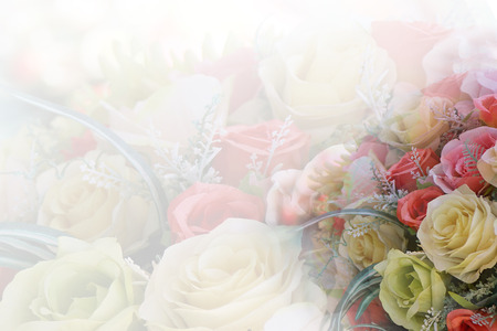 sweet hart rose with fade background Stock Photo