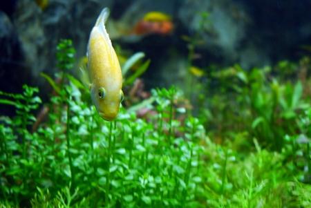 aquarium fish life Stock Photo