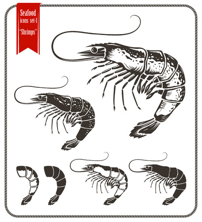 prawn: Shrimp. Various type of shrimps and shrimp tail. Graphic style vector shrimps isolated on white background.