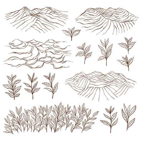 rural india: Tea plantations and plants. Tea garden on the hill. Tea bush. Tea leaves. Hand drawn vector illustration.