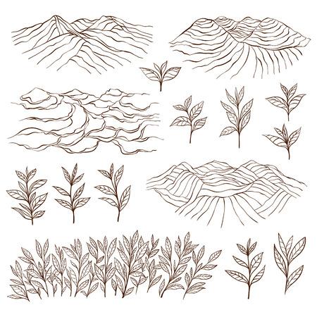 Tea plantations and plants. Tea garden on the hill. Tea bush. Tea leaves. Hand drawn vector illustration.