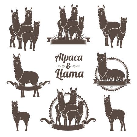 Alpaca and llamas emblems collection. Annimal badegs set.