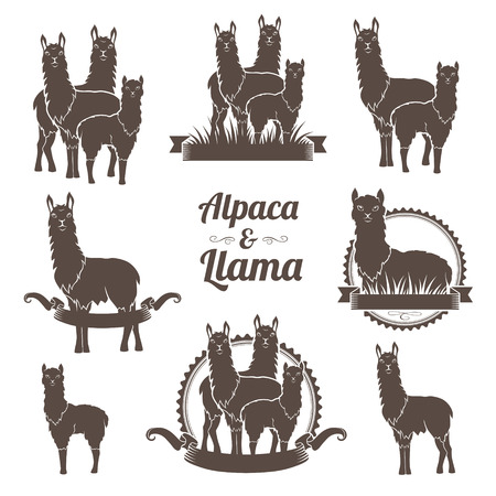 Alpaca and llamas emblems collection. Annimal badegs set.