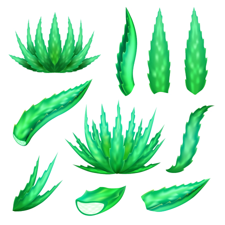 dermatologist: Aloe vera plant and leaves set. Vector icons of agave bush, leaf and slice