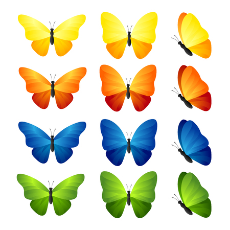 green butterfly: Butterfly set. Vector illustration of tropical blue, yellow, orange and green  butterflies. Illustration