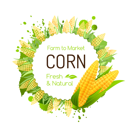 Sweet corn label. Vector banner with maize corbs. Decorative frame for package design.