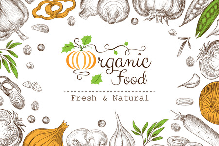Organic food banner with vegetables collection in linear graphic style. Vector background.