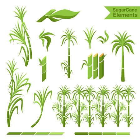 Sugar cane decoration elements. Collection of elemnts for design, Vectores
