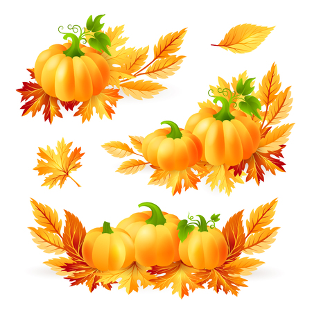 Thanksgiving design elements.  Pumpkins with autumn leaves.  Holiday vector decorations.