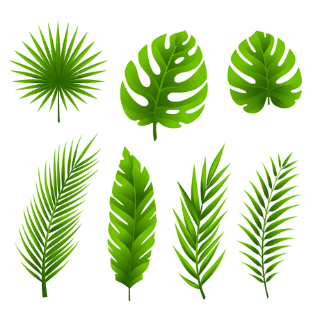 Jungle leaves set. Tropical palm tree leaves collection.