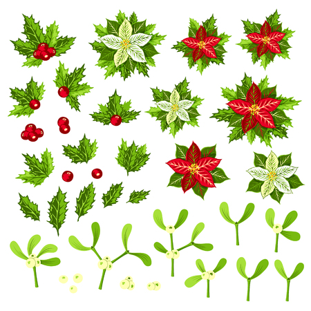 Christmas plants: poinsettia, holly and mistletoe. Collection of decorative elements for your design.