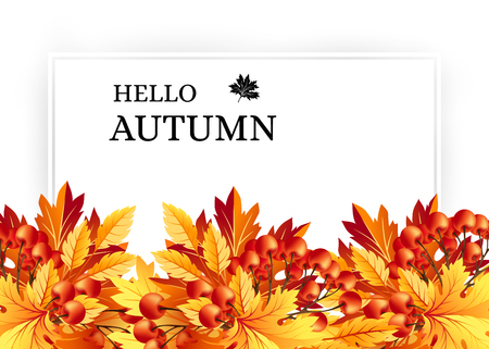rowanberry: Autumn background with fall maple tree leaves and rowanberry. Horizontal vector banners with season foliage decorations and copy space
