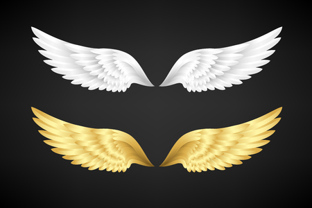 Wings collection. White and gold color variants. Vector illustration. Illustration