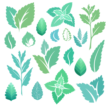 Mint leaves and branches icons set. Vector illustration Illustration