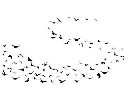 Flying birds. Decoration element from scattered silhouettes. Swirl wavy path
