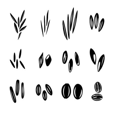 Rice types collection, isolated silhouettes for design.
