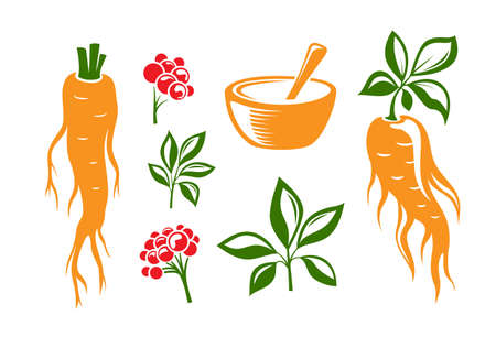 Red ginseng. Traditional chinese golden root. Isolated vector illustration. Colorful silhouettes.