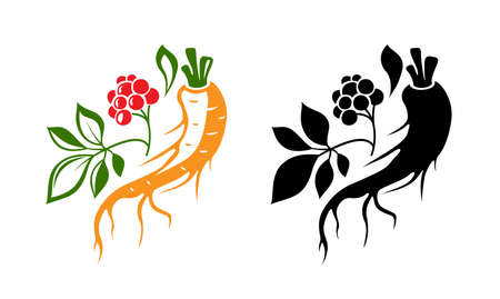 Red ginseng emblem. Traditional chinese golden root. Isolated vector illustration. Colorful and black silhouettes.