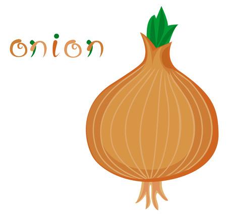 allium: Onion. Illustration of fresh vegetable. Cartoon yellow onion. Clip art with title. Isolated on white.