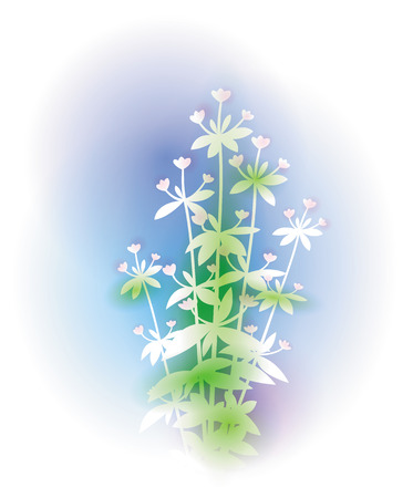 origanum: Illustration with oregano bunch. Silhouette of bunch of oregano and soft background like watercolor paintings. Spice herbs series. Illustration