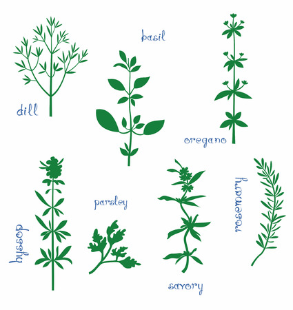 leaf close up: Aromatic herbs set. Silhouettes of dill, basil, oregano, hyssop, parsley, savory, rosemary and some text. Isolated on white.