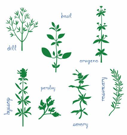 basil herb: Hierbas arom�ticas establecen. Siluetas de eneldo, albahaca, or�gano, hisopo, perejil, ajedrea, romero y un poco de texto. Aislado en blanco.