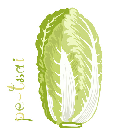 napa: Chinese cabbage. Illustration of fresh vegetable. Cartoon Pe-Tsai, a common Chinese leaf vegetable. Clip art with title. Isolated on white.