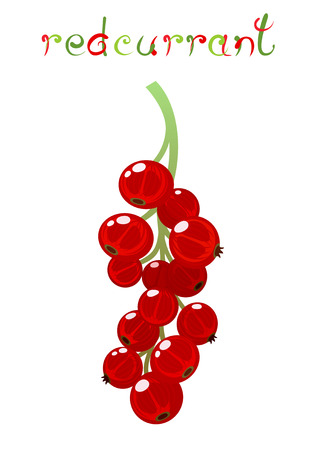 red currant: Red Currant berry. Illustration of brunch fresh ripe redcurrant. Clip art with title. Isolated on white.